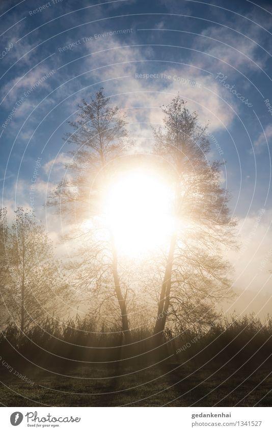 Ring of Fire Umwelt Natur Landschaft Himmel Wolken Sonne Sonnenaufgang Sonnenuntergang Herbst Schönes Wetter Baum träumen fantastisch hell Wärme kontrast