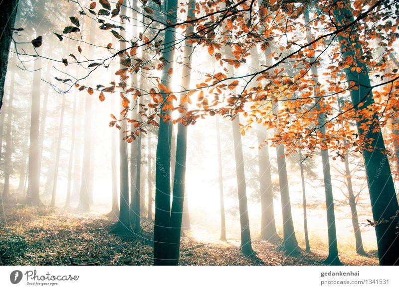 roter Oktober Natur schön Baum Landschaft Tier Wald Umwelt Herbst Zufriedenheit Nebel Schönes Wetter Romantik Frieden Gelassenheit