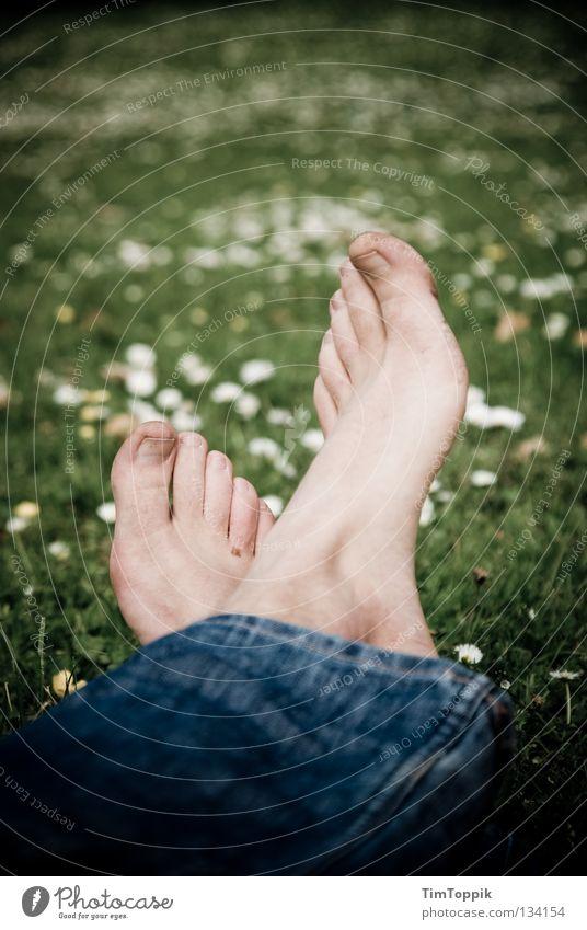 Schwarzfußwiese Fuß Wiese Rasen Gras Blume Gänseblümchen Jeanshose Jeansstoff Beine Erholung Park schlafen Sommer Frühling dreckig Mittagsschlaf Freude