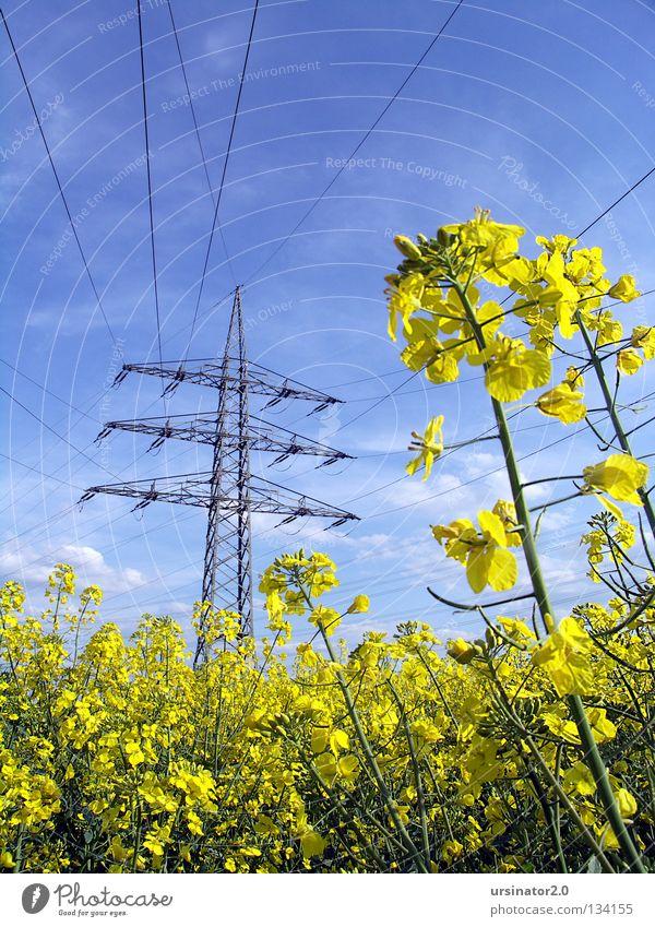 Rapsfeld unter Hochspannung Himmel weiß blau Wolken gelb Wetter Industrie Energiewirtschaft Elektrizität Landwirtschaft Stahl Appetit & Hunger Erdöl Strommast Draht Leitung