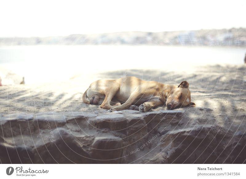 Ohne Termine Hund Sommer Baum Meer Landschaft ruhig Tier Strand Umwelt Zeit Stimmung Sand liegen träumen Zufriedenheit Freizeit & Hobby