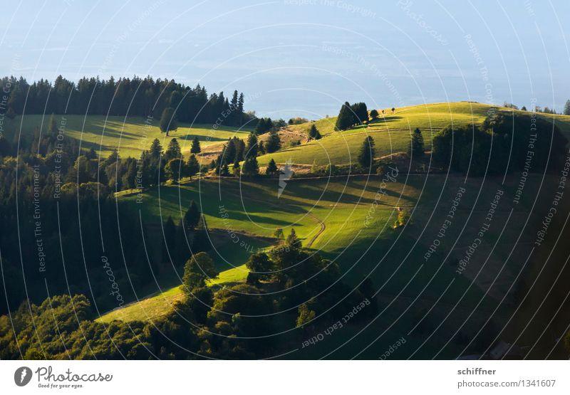 It hasn't gone away Umwelt Natur Landschaft Pflanze Sonnenlicht Sommer Schönes Wetter Baum Gras Wiese Wald Hügel Berge u. Gebirge grün Schatten Schattenspiel