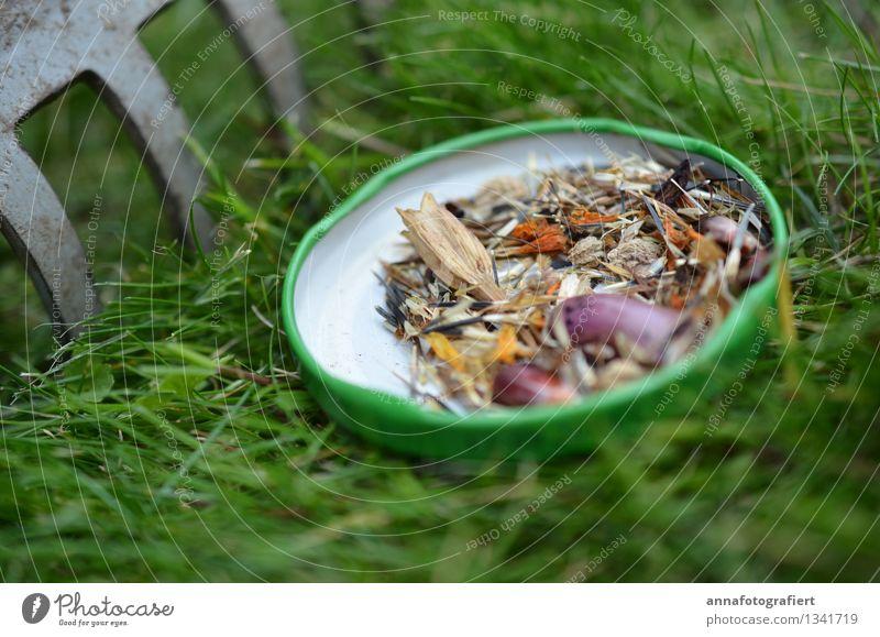 Saatgut im Garten Natur Stadt Pflanze grün Umwelt Frühling Wiese Gras Park Feld frisch Glas authentisch Beginn Blühend