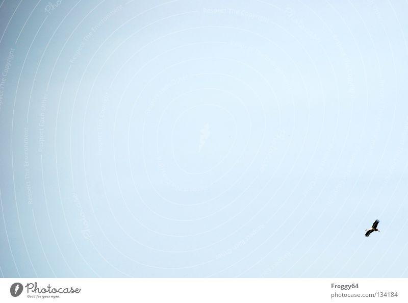 Flugwetter Vogel Storch Feder schwarz weiß Wolken Luft Himmel Flügel blau himmel Wind Luftverkehr fliegen