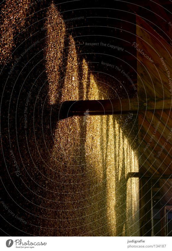 Goldregen Wasser Farbe Regen gold glänzend nass Wassertropfen Luftverkehr Bergbau Salz Kur sprühen Abendsonne Saline Salzwerk Schwarzdorn