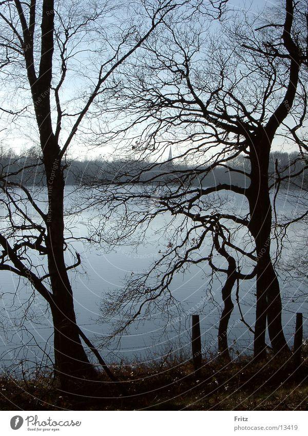 beck-motiv-28 Herbst Baum See Wasser