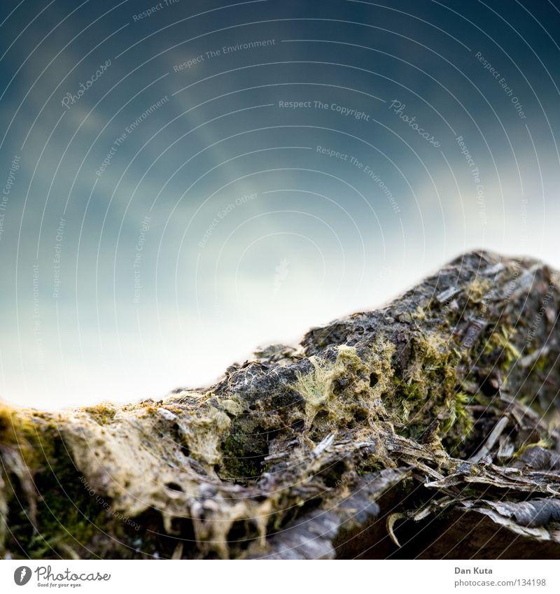 Makrowurzel Baum grün bewachsen Reifezeit durcheinander abstrakt Wolken Makroaufnahme Tiefenschärfe Vordergrund Hintergrundbild Nahaufnahme Ast Bodenbelag