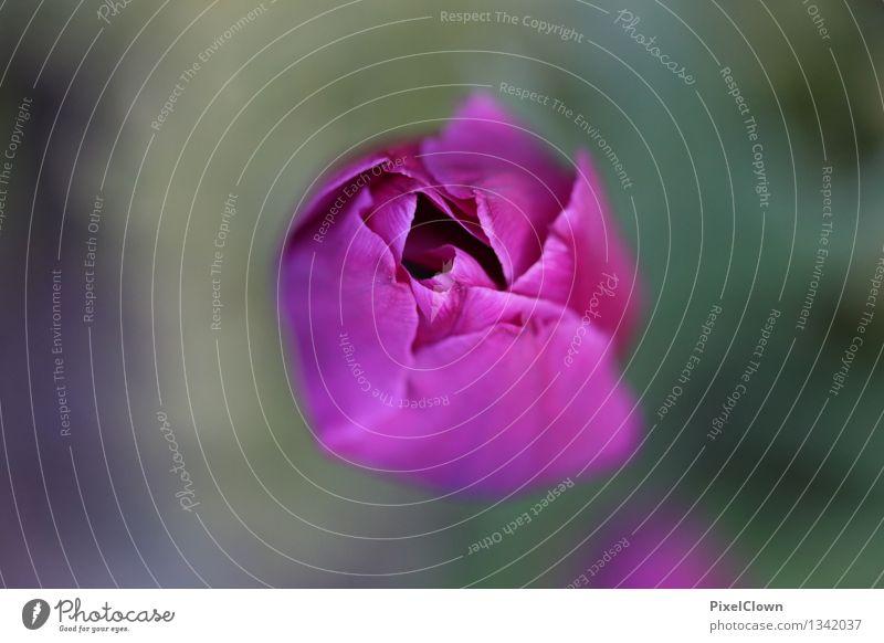 Tulpe Natur Pflanze schön Blume Blatt ruhig Blüte Gefühle Wiese Stil Garten Wachstum elegant Blühend Wellness violett
