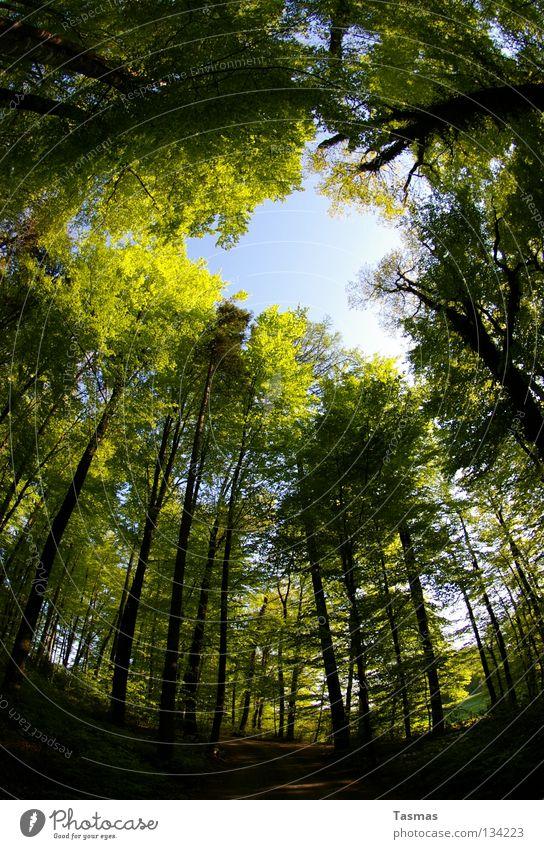 17:30 Fahrt durch den Wald Sonne Himmel Frühling Baum Straße drehen rund grün Lichteinfall Waldlichtung Drehung Baumschatten Pfingsten Arbeitsweg Loch