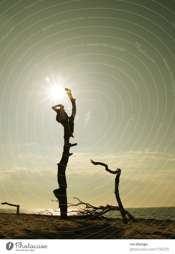 AUSBLICKER Baum Baumstamm morsch Meer See Strand Sandstrand Blende blenden Gegenlicht dunkel schwarz mehrfarbig Licht Silhouette Mann maskulin Kerl Aussicht
