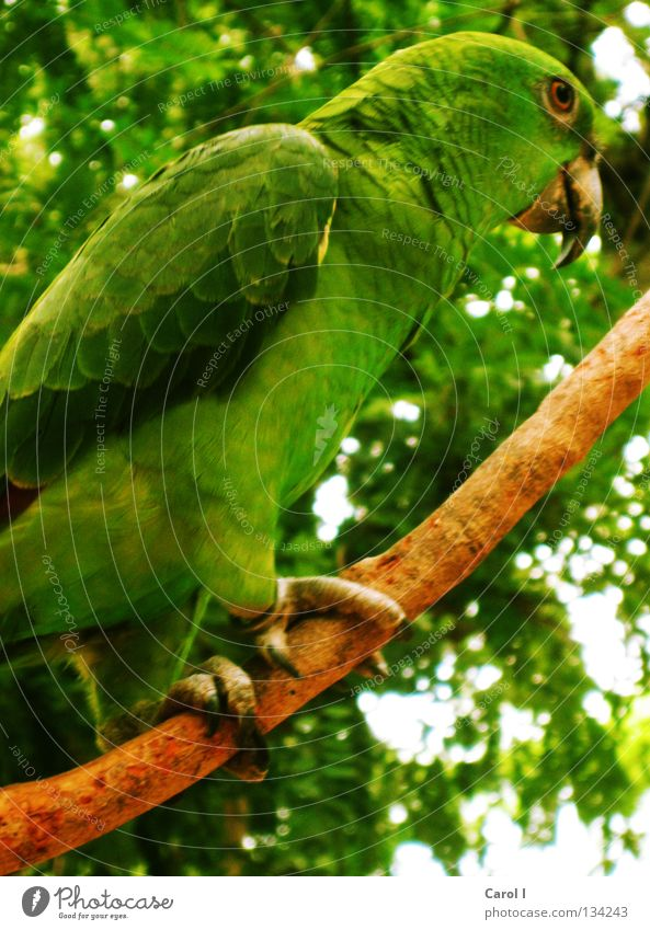 grün, grün, und grün Himmel Baum Sommer Auge Freiheit Holz Fuß Park braun Vogel glänzend fliegen trist stehen Feder