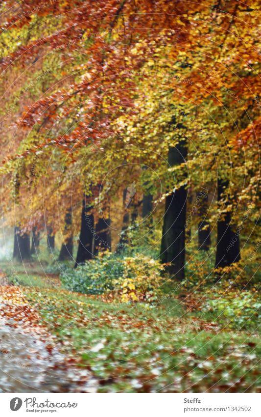 Herbstspaziergang im Oktober Herbstwald Herbstlandschaft Herbstlaub Herbstbäume Saisonende Fußweg nach dem Regen warme Herbstfarben Oktoberwald goldener Oktober