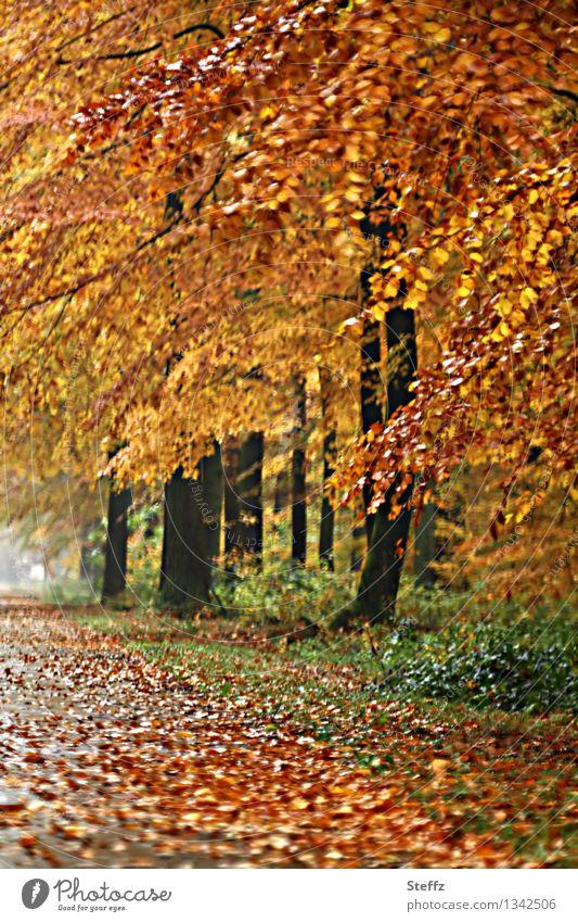 Herbsttag Natur Landschaft Baum Blatt Herbstlaub Buche Wald Waldrand Herbstwald Herbstlandschaft nass schön gold orange Herbstgefühle Waldstimmung Warme Farbe