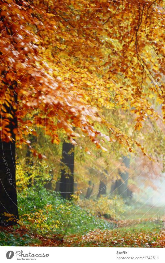 stimmungsvoller Nebel im Herbstwald Herbstnebel Waldbaden Nebelwald Nebelstimmung Herbstlandschaft goldener Herbst romantisch nebelig neblig Herbstfärbung