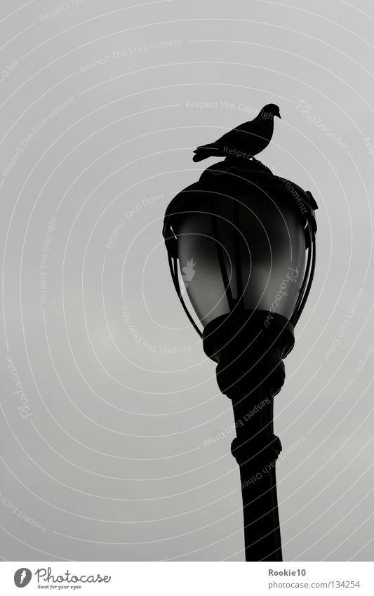 """"""" My dark place """" Vogel Taube Laterne Tier Platz dunkel Trauer Außenaufnahme trist Einsamkeit bewachen besetzen Besitz Gesellschaft (Soziologie) Zusammensein"""