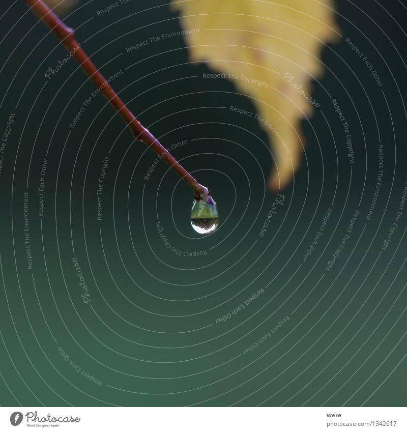 Herbstwetter Natur Landschaft Pflanze Wasser schlechtes Wetter Regen Baum Blatt Grünpflanze Wald nass Zufriedenheit Umweltschutz Biotop Jahreskreislauf