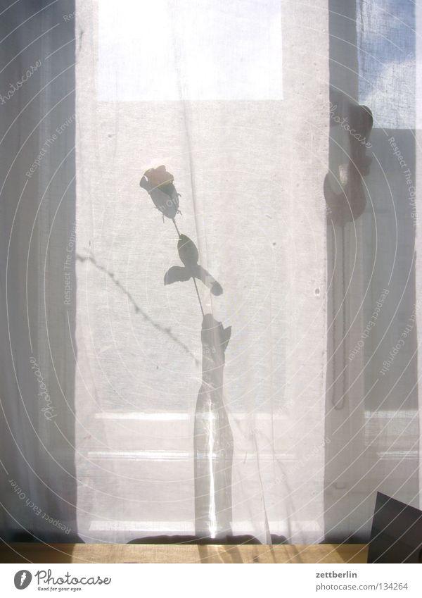 Rose für Dich Sommer Blume Fenster Wind Dekoration & Verzierung Romantik Rose Partnerschaft Gardine Vase Blumenvase