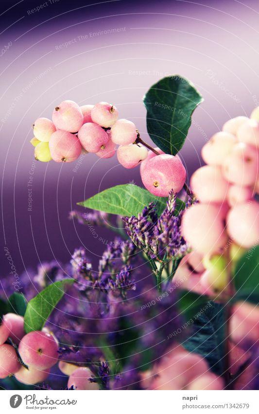 FUNKY Schneeberen Pflanze Sträucher Blatt Blüte Wildpflanze Kitsch retro grün violett rosa Farbe Kreativität Kunst Natur Herbst herbstlich flippig bunt verrückt
