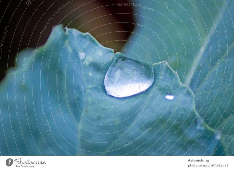 Tropfen Umwelt Natur Pflanze Wasser Wassertropfen Herbst Wetter Regen Blatt Grünpflanze nass blau grün Blattadern Linie Farbfoto Außenaufnahme Nahaufnahme