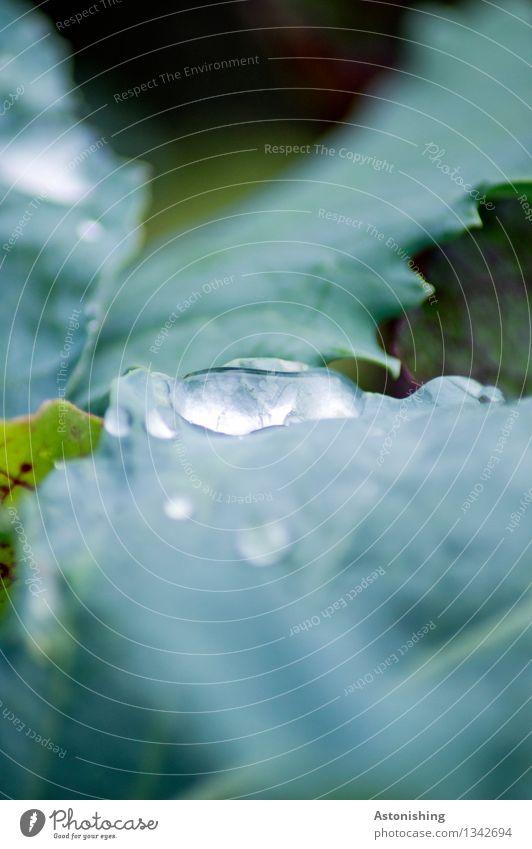 nach dem Regen Umwelt Pflanze Wasser Wassertropfen Blatt Grünpflanze nass blau grün Blattadern Herbst Farbfoto Außenaufnahme Detailaufnahme Makroaufnahme