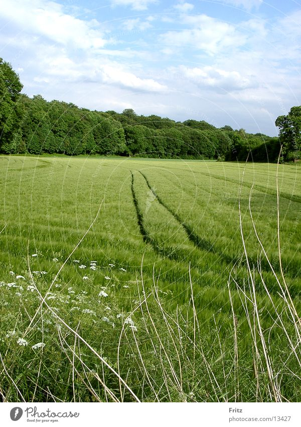acker-im-frühjahr Frühling Feld grün Spuren
