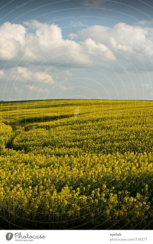 Rapsodie in gelb Himmel blau Pflanze Sommer Ferien & Urlaub & Reisen Wolken Ferne Frühling Freiheit Landschaft Luft Feld Wetter Horizont Wachstum