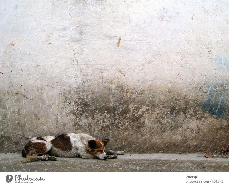 Faules Stück schlafen Siesta Halbschlaf Pause zurückziehen Hund Tier Haustier Mischling verfallen dreckig Müll weiß Udaipur Indien Sommer Säugetier lazy liegen