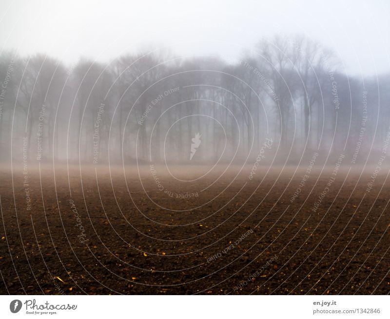Pause Natur Pflanze Erholung Landschaft ruhig Winter dunkel Wald Umwelt Traurigkeit Herbst braun träumen Feld Nebel Wachstum