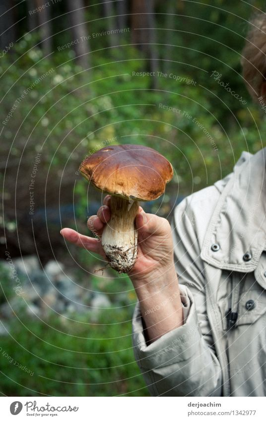 Gefunden Pilz Vegetarische Ernährung Glück Gesunde Ernährung Zufriedenheit Ausflug wandern feminin Senior Finger 1 Mensch 60 und älter Umwelt Herbst