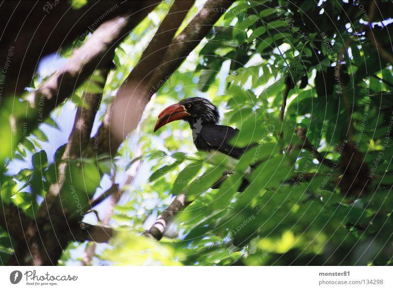 seltener Besucher grün Farbe Vogel Urwald verstecken Mangel beeindruckend
