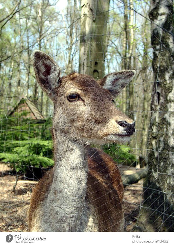 reh Natur Tier Wald Reh