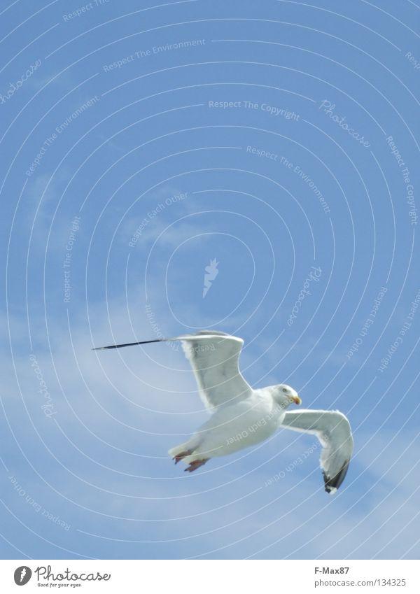 Möve Himmel weiß Meer blau Strand Wolken Vogel Küste fliegen Luftverkehr