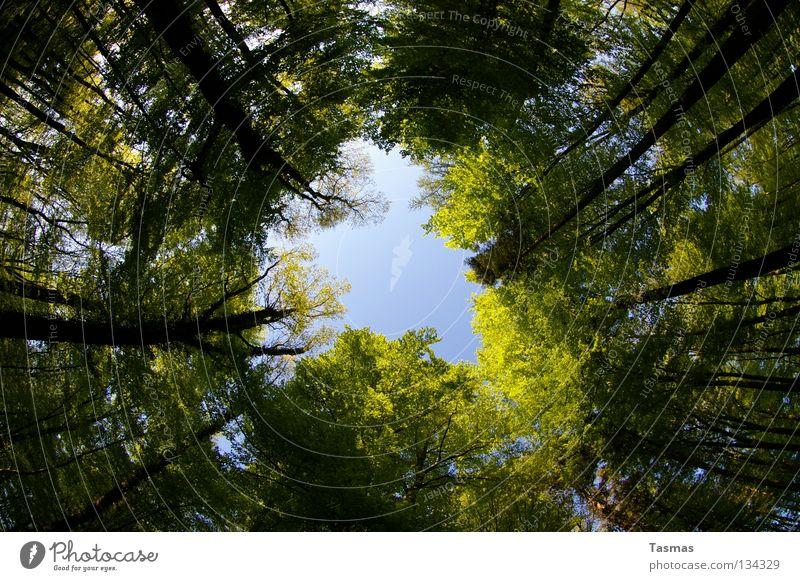 17:35 Alles dreht sich Himmel grün Sonne Baum Wald Straße Frühling rund Loch drehen Drehung Fischauge Lichteinfall Waldlichtung Arbeitsweg Pfingsten