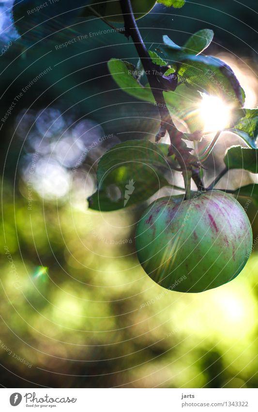 wir ernten was wir säen Natur Pflanze Baum Herbst natürlich Gesundheit Garten Lebensmittel Frucht frisch Schönes Wetter rund Bioprodukte Ernte Apfel saftig