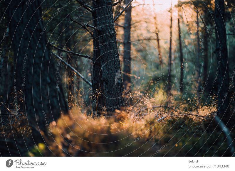 Herbstzauber Natur Landschaft Pflanze Schönes Wetter Baum Gras Sträucher Wald hell nah Wärme einzigartig elegant Idylle Farbfoto Außenaufnahme Menschenleer