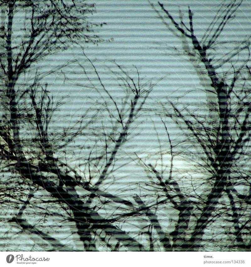 Spiegelspiele (II) Fenster Haus Baum Vorhang Jalousie Wolken Sträucher durcheinander Holz Pflanze horizontal Reflexion & Spiegelung Detailaufnahme Glas Ast