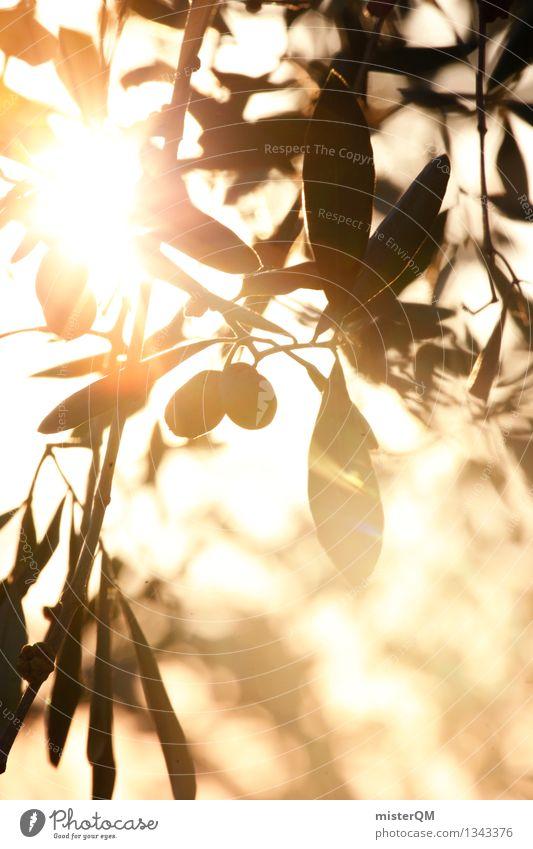 Sonnenöl I Kunst Kunstwerk ästhetisch Oliven Olivenbaum Olivenöl Olivenblatt Olivenernte Sonnenstrahlen mediterran südländisch Italien Urlaubsstimmung Farbfoto
