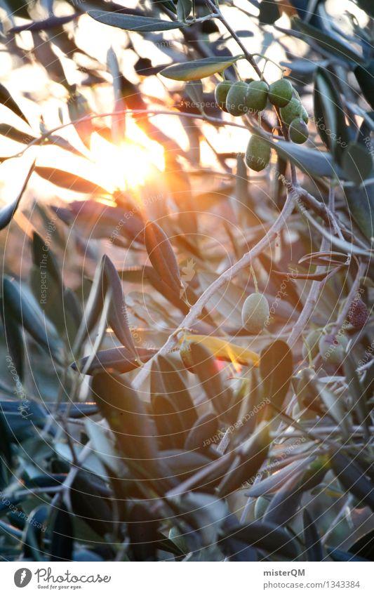 Sonnenöl II grün Kunst ästhetisch Italien mediterran reif Oliven Olivenbaum Olivenöl Olivenblatt Olivenernte