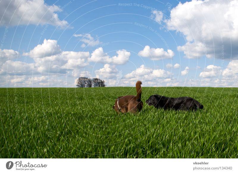 komm, wir gehn nach panama Ferien & Urlaub & Reisen Tier Ferne Gras Freiheit Hund Freundschaft wandern Horizont Frieden Säugetier