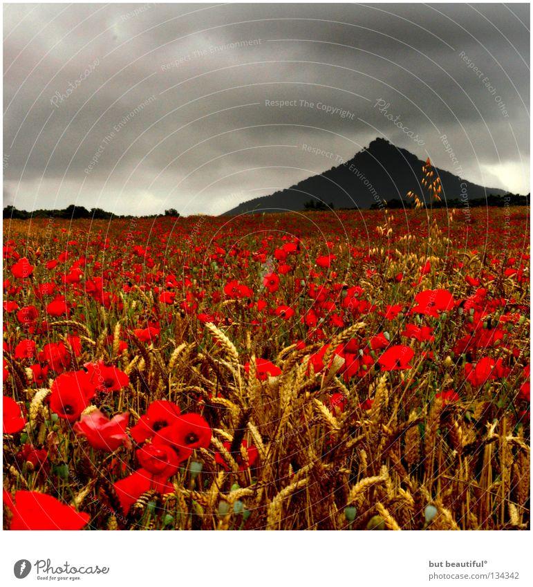 mohnschein° schön Himmel Sommer Wolken Berge u. Gebirge grau Traurigkeit Stimmung Feld geheimnisvoll Mohn Korn poetisch Mohnfeld