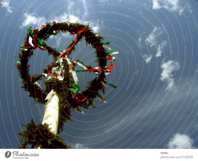 Flatterbaum, sagt Lukas Himmel grün Baum Wolken oben Frühling Holz Feste & Feiern offen Schilder & Markierungen hoch frei frisch Dekoration & Verzierung rund