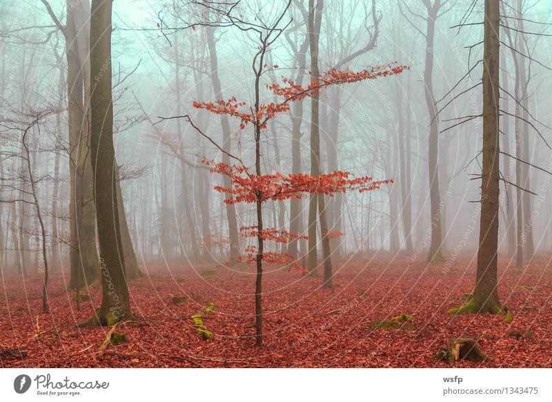 Zauber Wald in rot und türkis Baum Blatt Frühling Herbst träumen Nebel Surrealismus Zauberei u. Magie mystisch bezaubernd Fantasygeschichte Märchenwald