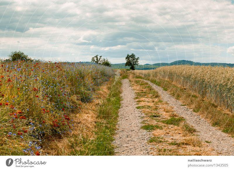 Feldweg Sommer Umwelt Natur Landschaft Himmel Pflanze Baum Blume Gras Getreidefeld Hügel Wege & Pfade Wachstum Unendlichkeit natürlich schön blau gelb Romantik