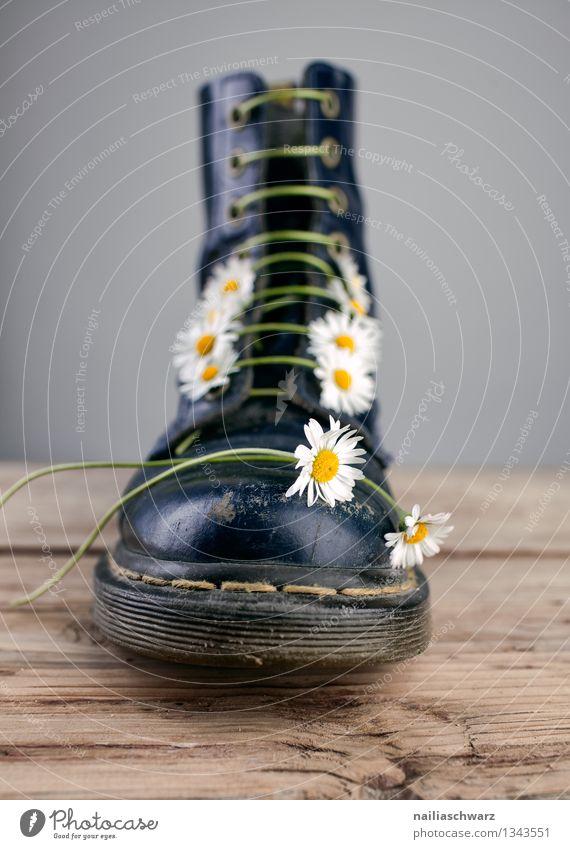 Stiefel mit Gaensebluemchen Blume Schuhe Originalität schön blau gelb schwarz damenstiefel schwer Gänseblümchen riemen geschnürt Gegenteil Schuhbänder Farbfoto