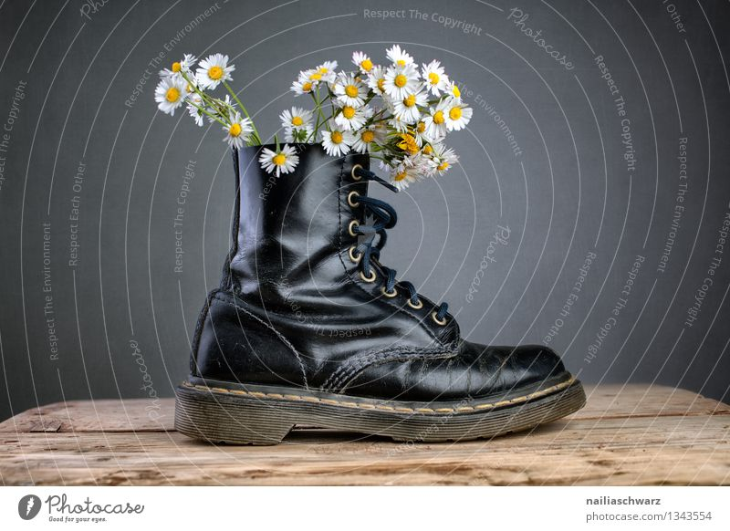 Stiefel mit Gaensebluemchen Pflanze Blume Blüte Wildpflanze Mode Schuhe außergewöhnlich einfach trendy schön lustig natürlich Originalität positiv blau gelb