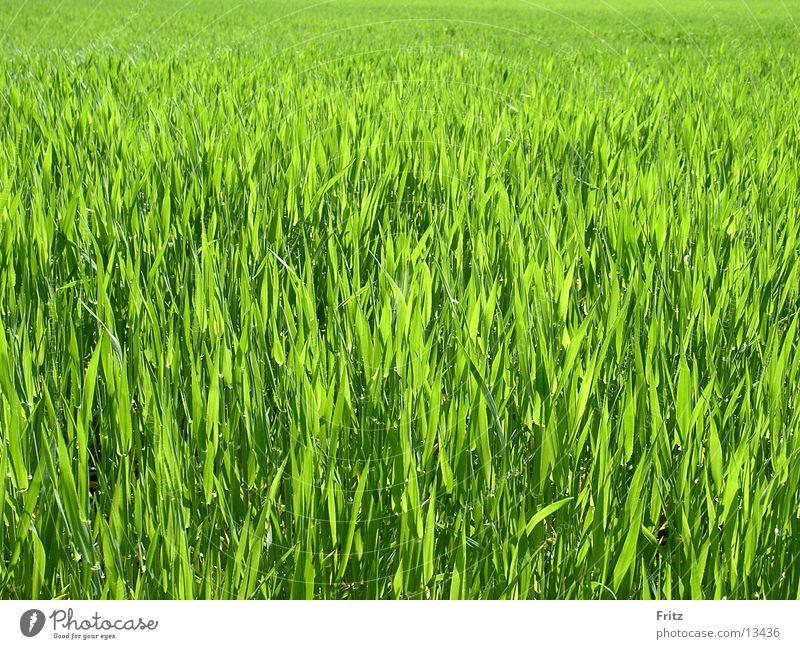 erste-saat grün Frühling Feld Aussaat