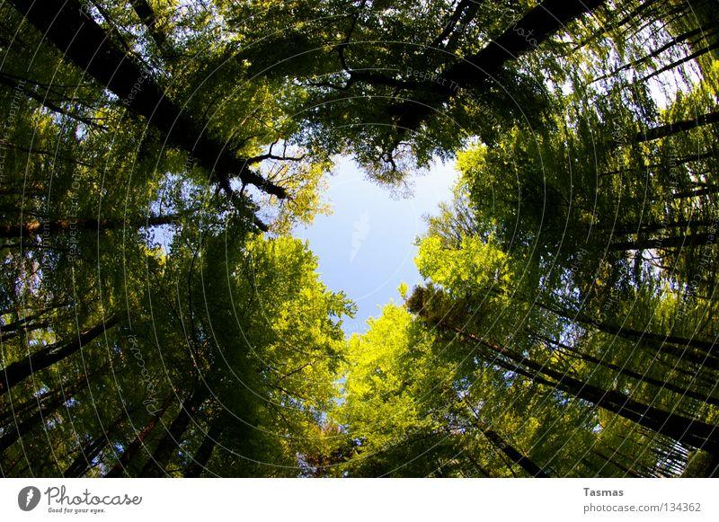 17:36 can't stop drehing aröund Himmel Baum Sonne grün Straße Wald Frühling Herz rund Loch drehen Drehung Waldlichtung herzlich Lichteinfall Arbeitsweg