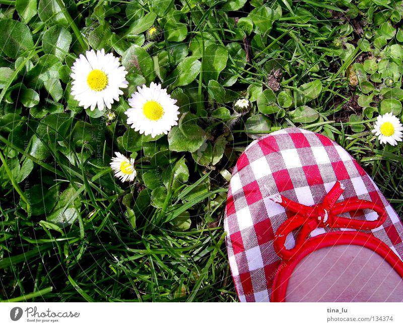 frühlingsschuh II Frühling frisch Wiese Gras grün Gänseblümchen grasgrün Blume Schuhe rot kariert Sommer sommerlich weiß Zehen Barfuß Halm Löwenzahn ausschalten