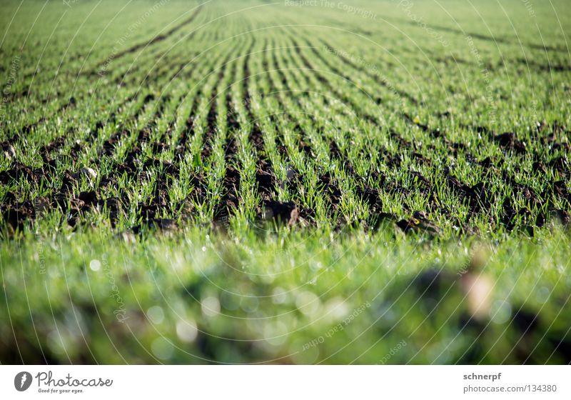 Noch mehr Brot Gras Feld grün frisch feucht Weizen Roggen Grasnarbe Hügel Grünfläche Grasland Viehweide Weide Rasen nass Regen Sportrasen Wiese fruchtbar