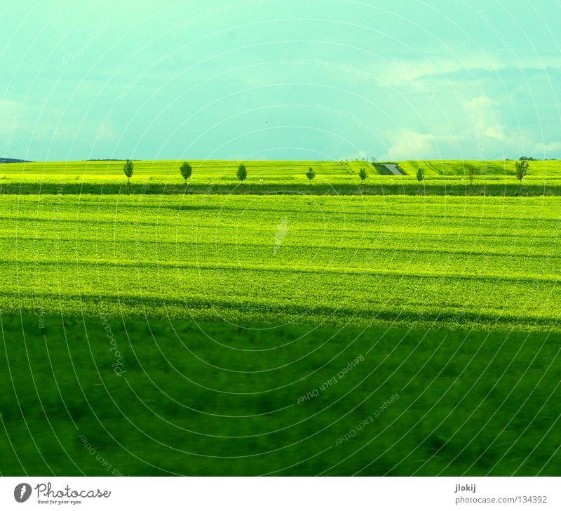 Dreigeteilt Raps Feld Landwirtschaft Blüte gelb grün Wolken Gelbstich Baum Allee Rapsöl Gras Wiese Streifen Pflanze Biokraftstoff Himmel planen Blühend Straße